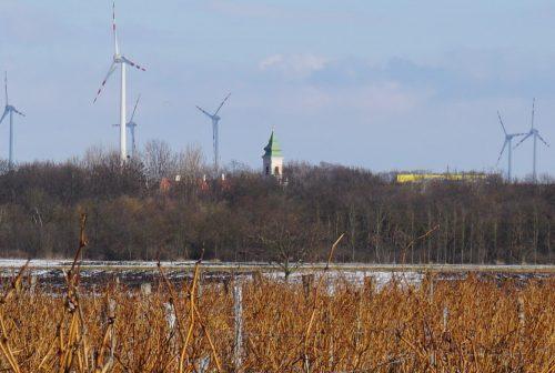 Winterstimmung im Weingarten. Der Kirchturm von Mönchhof von den Weingärten aus gesehen.