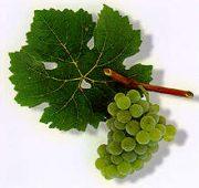 scheurebe_grape